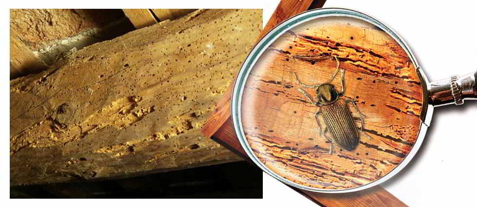 Eliminar la carcoma - Como eliminar la polilla de la madera ...