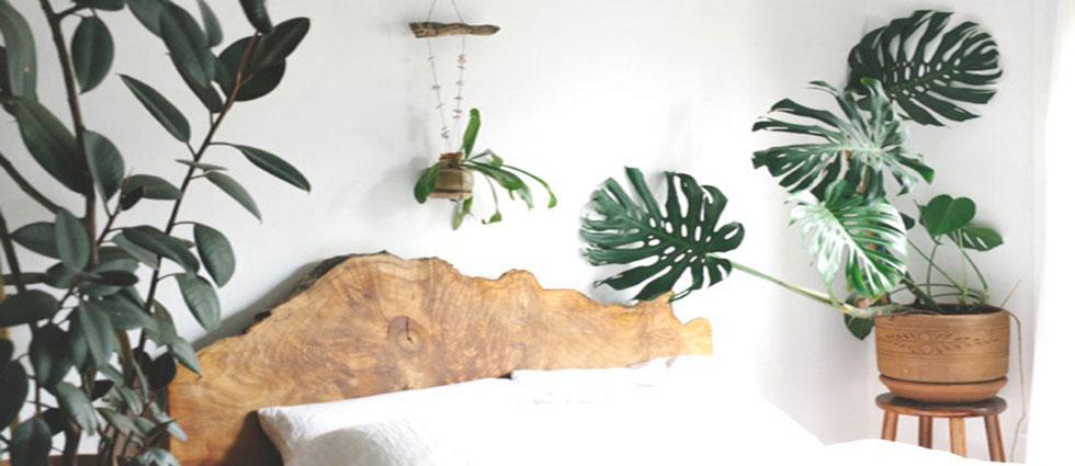 planta monstera deliciosa en interiorismo
