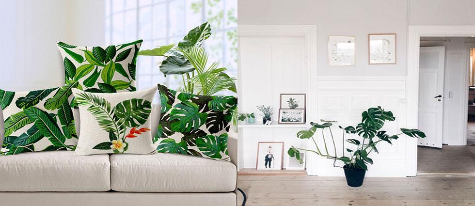 planta monstera deliciosa en casas