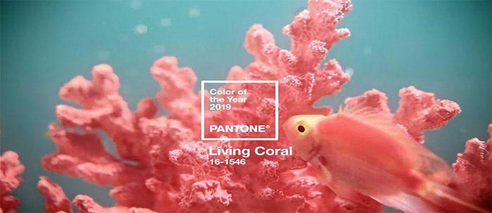 living coral color pantone del 2019 de actualidad